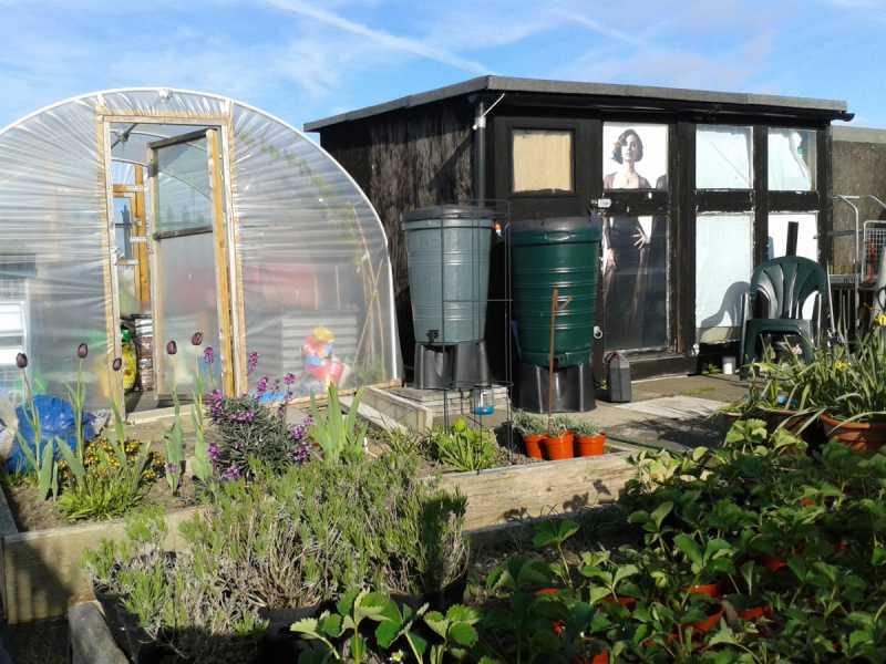 garden-shed1.jpg