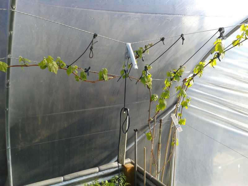 garden-vine-2.jpg